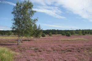 Colbitz-Letzlinger Heide