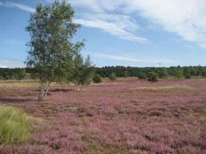 Colbitz Letzlinger Heide